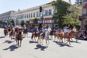Alameda July 4 Parade Horses